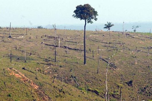 desmatamento_Arquivo Agência Brasil