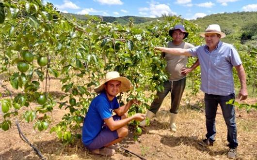 Produtores aumentam renda cultivando maracujá em Juru