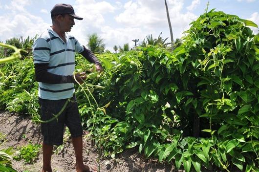 Universidades levam tecnologia do inhame agroecológico da Paraíba para a Bahia