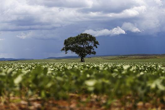 produção agrícola-Agência Brasil