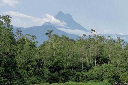 Pico da Neblina- Icmbio