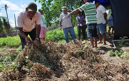 Dia de Campo_ amendoim agroecológico