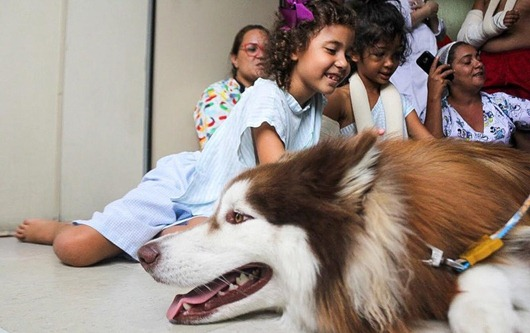 Hospital de Trauma inicia terapia com cães para auxiliar em tratamentos