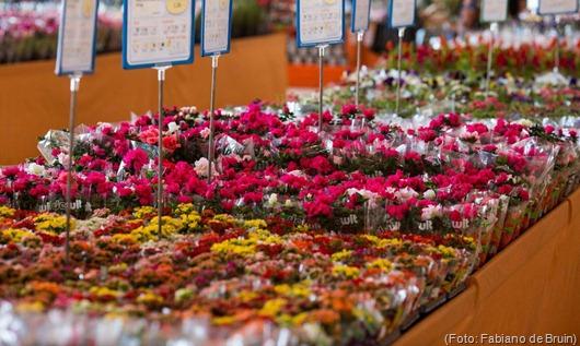 shopping_das_flores_-_credito_fabiano_de_bruim_
