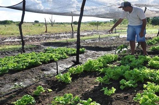 Governo seleciona e orienta agricultores para acesso a programa de fomento rural