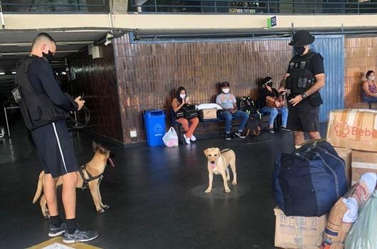 PM_treinamento_cães farejadores