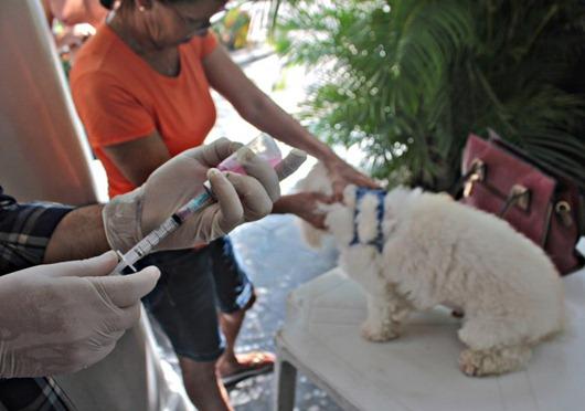vacina contra raiva animal