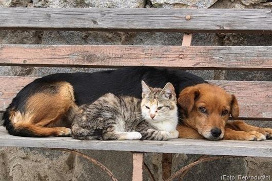 gato_cão