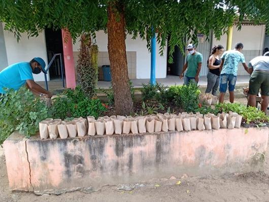 Escola Estadual de Ensino Fundamental e Médio Campo Sementes e Mudas