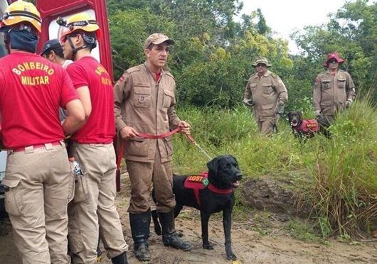 cães_bombeiros