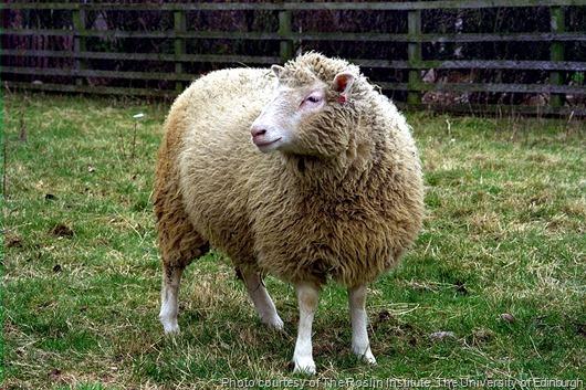 dolly-clone-ovelha