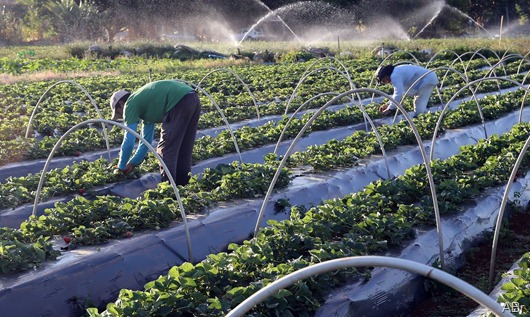 agricultura familiar-Agência Brasil